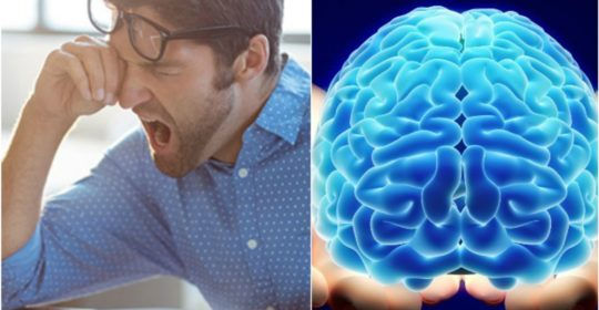 When You're Tired, Your Brain Cells Actually Slow-Down