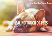 THE HEALING TOUCH OF PETS