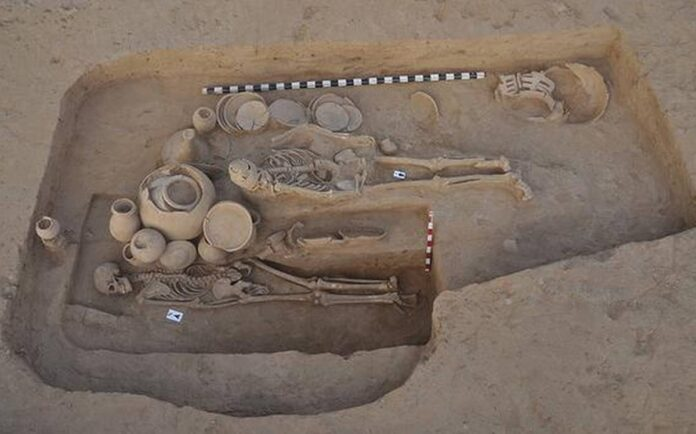 People of Indus Valley Civilization used to eat beef: Research